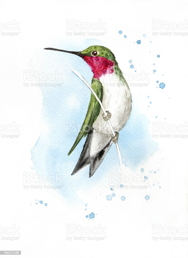 Alert Perched Hummingbird vector art illustration