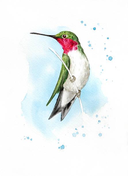 Alert Perched Hummingbird vector art illustration