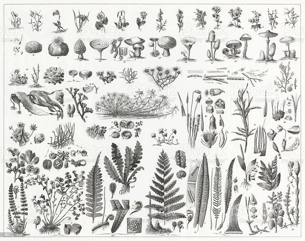 Algae, Fungi & Non-Flowering Plants vector art illustration