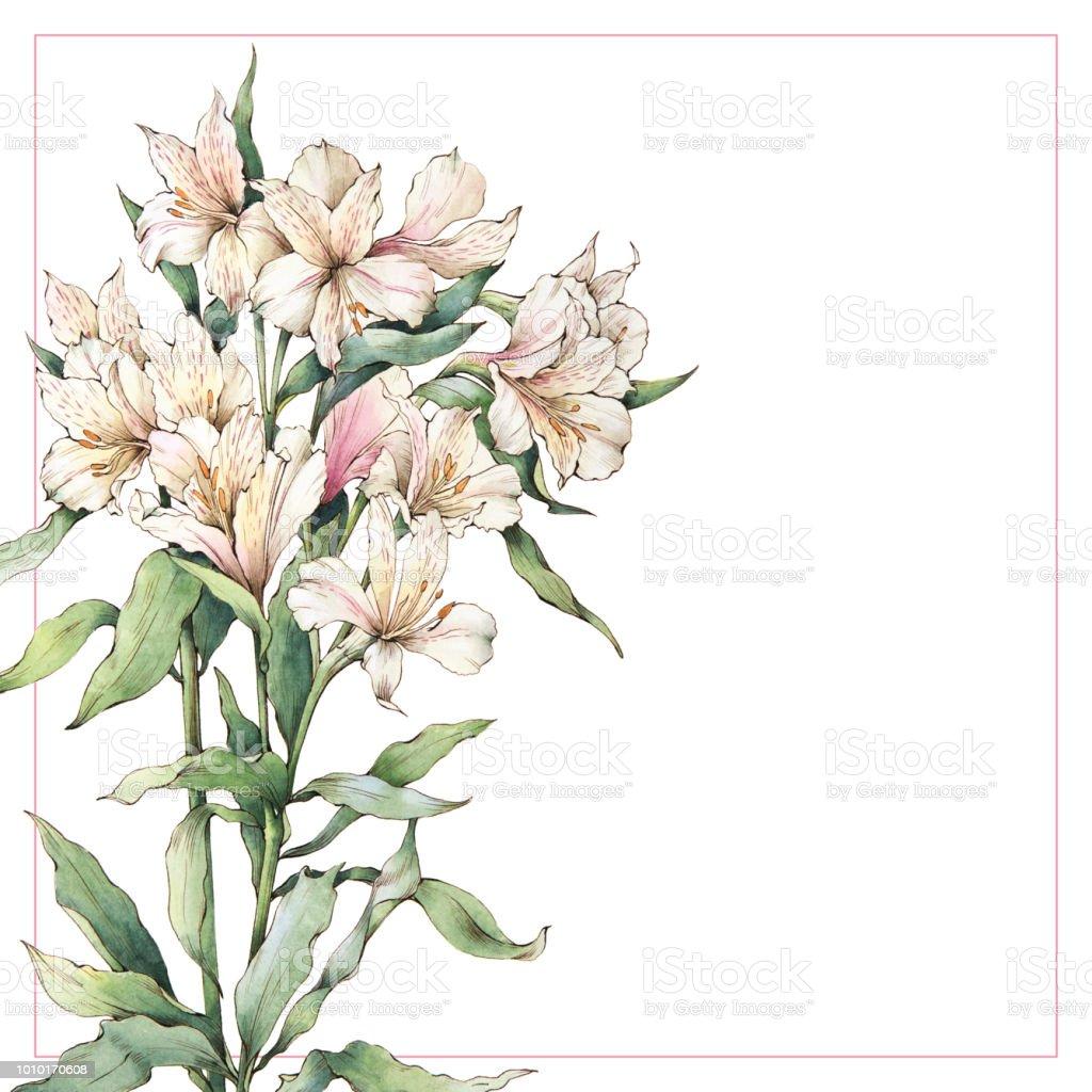Ramo de flores de Alstroemeria. - ilustración de arte vectorial