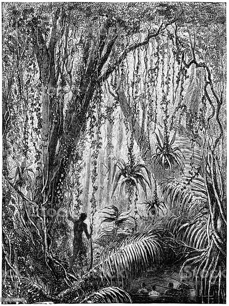 Amazon rain forest (1882 engraving) royalty-free stock vector art