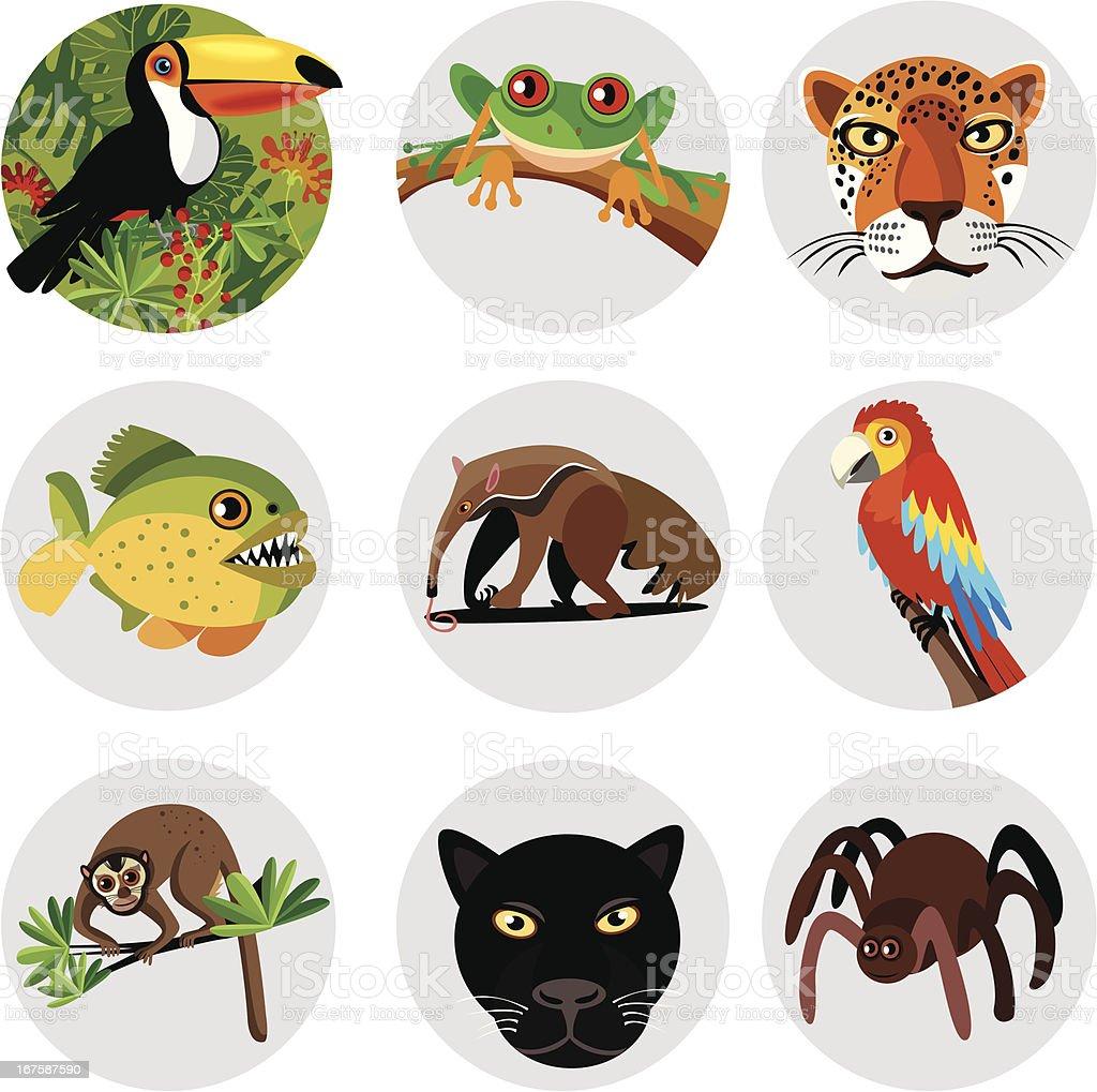 Amazon symbols vector art illustration