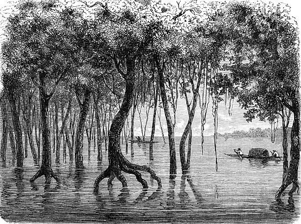 Amazonas flooding forest Amazonas flooding forest amazon stock illustrations