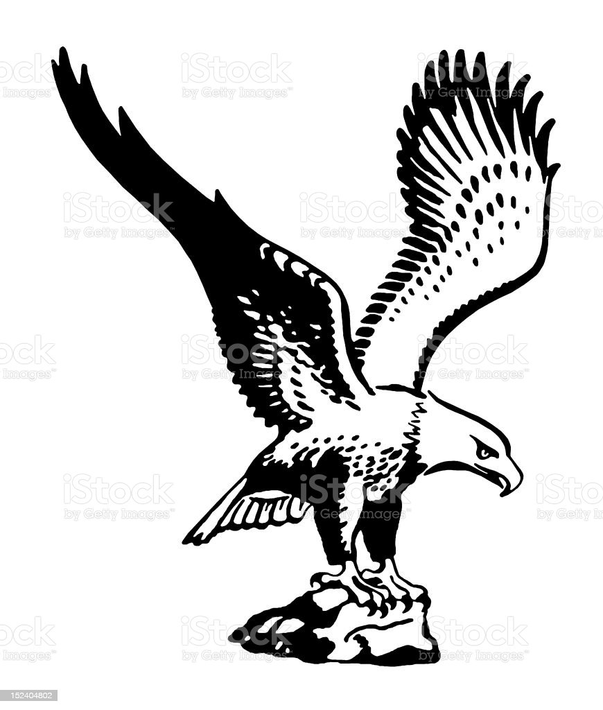 American Eagle royalty-free american eagle stock vector art & more images of animal