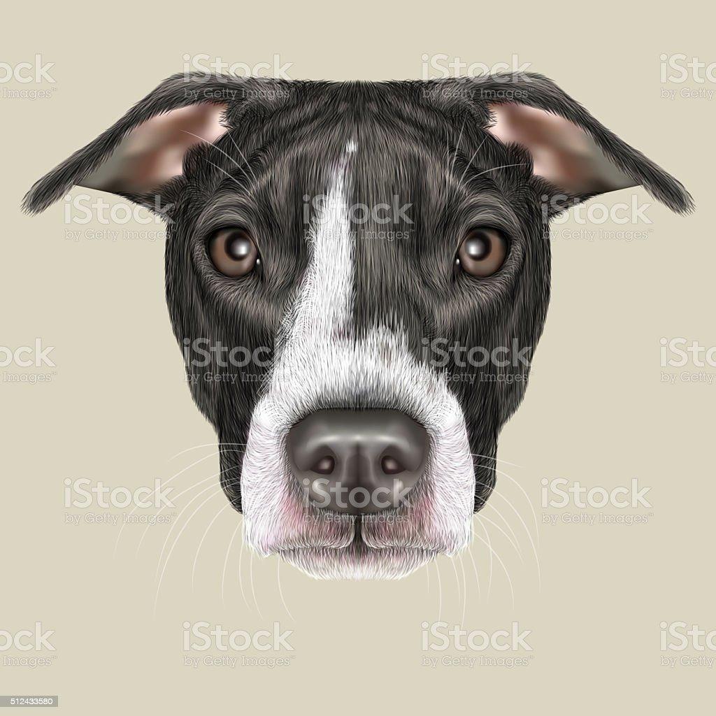 American Pit Bull Terrier Portrait vector art illustration