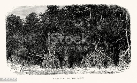 Vintage engraving of a African Buffalo Haunt. 1873