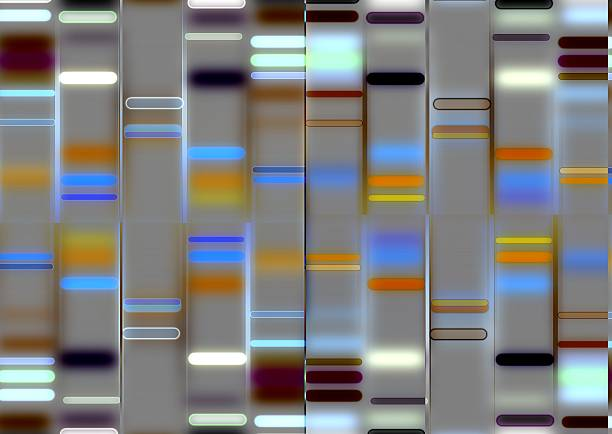 An illustration of a DNA structure DNA genomics stock illustrations