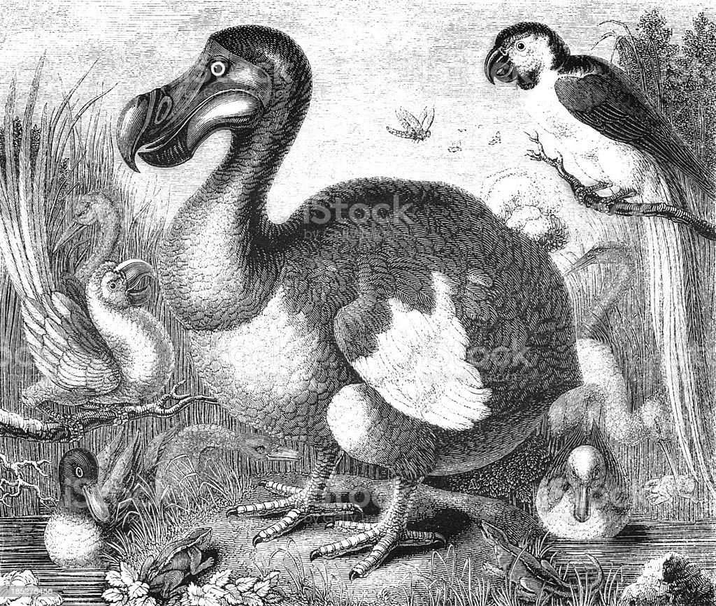 An illustration of a dodo bird in black and white royalty-free an illustration of a dodo bird in black and white stock vector art & more images of animal