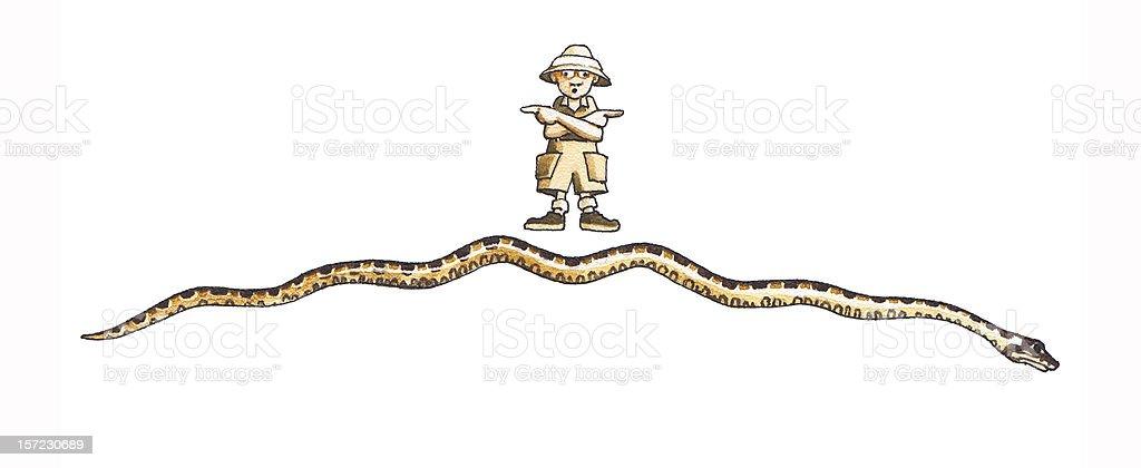 Anaconda (Eunectes murinus) vector art illustration