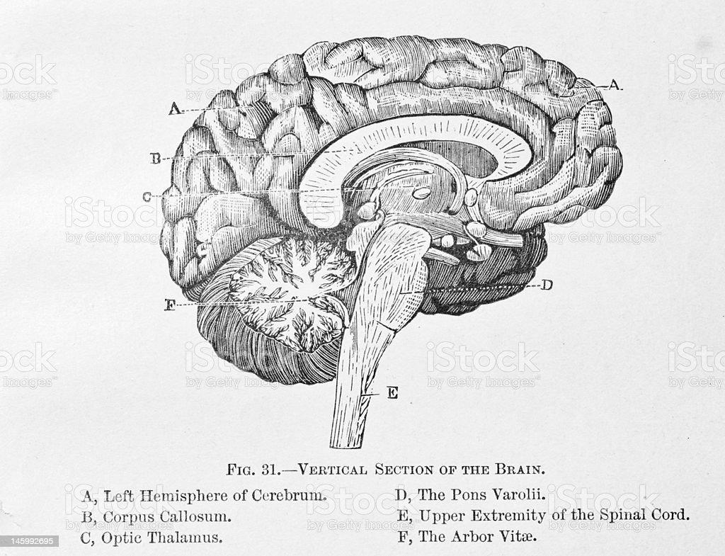 Analysis of the Human Brain vector art illustration