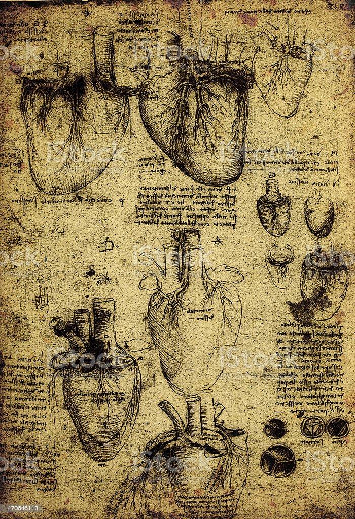 Arte De Anatomía - Arte vectorial de stock y más imágenes de ...