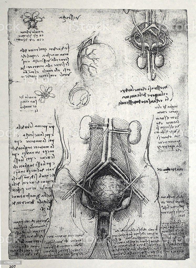 Anatomy art vector art illustration