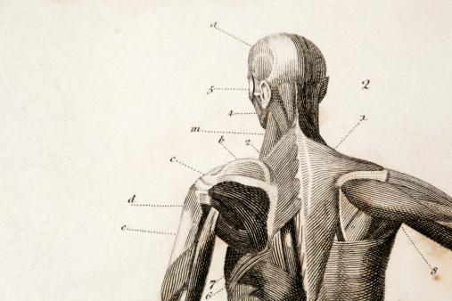 macro of an antique anatomy engraving.original engraving by James Amdee in 1809, English Encyclopedia.