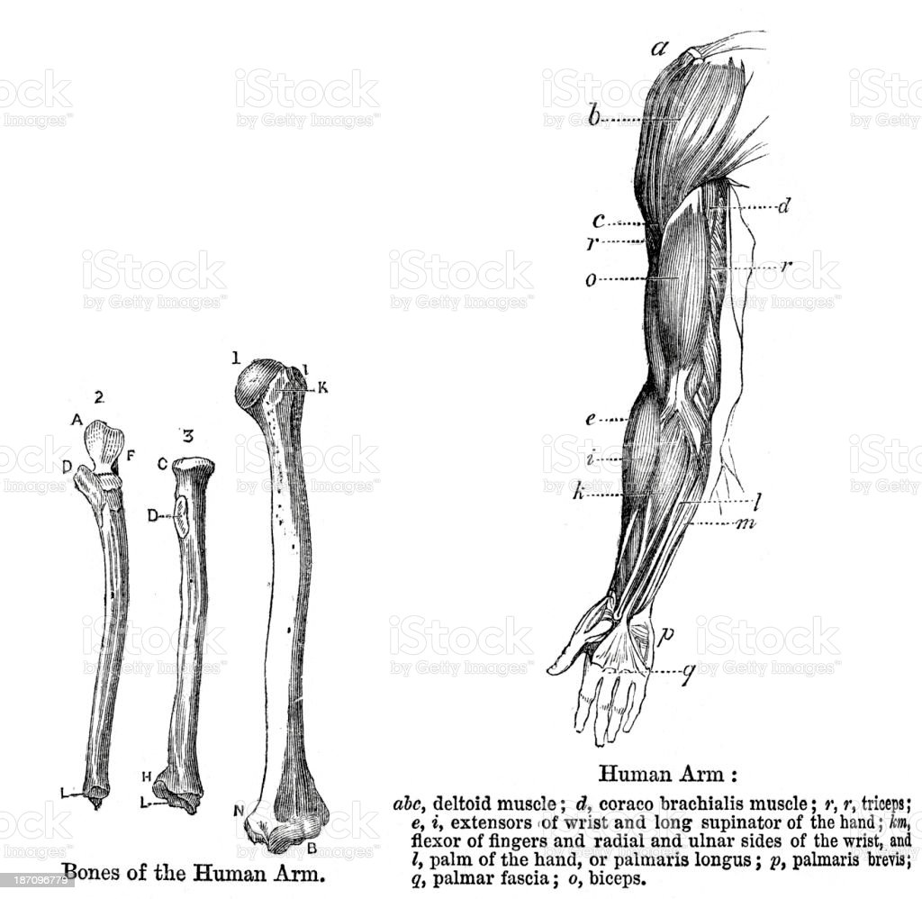 Awesome Palmar Fascia Anatomy Pictures - Anatomy Ideas - yunoki.info