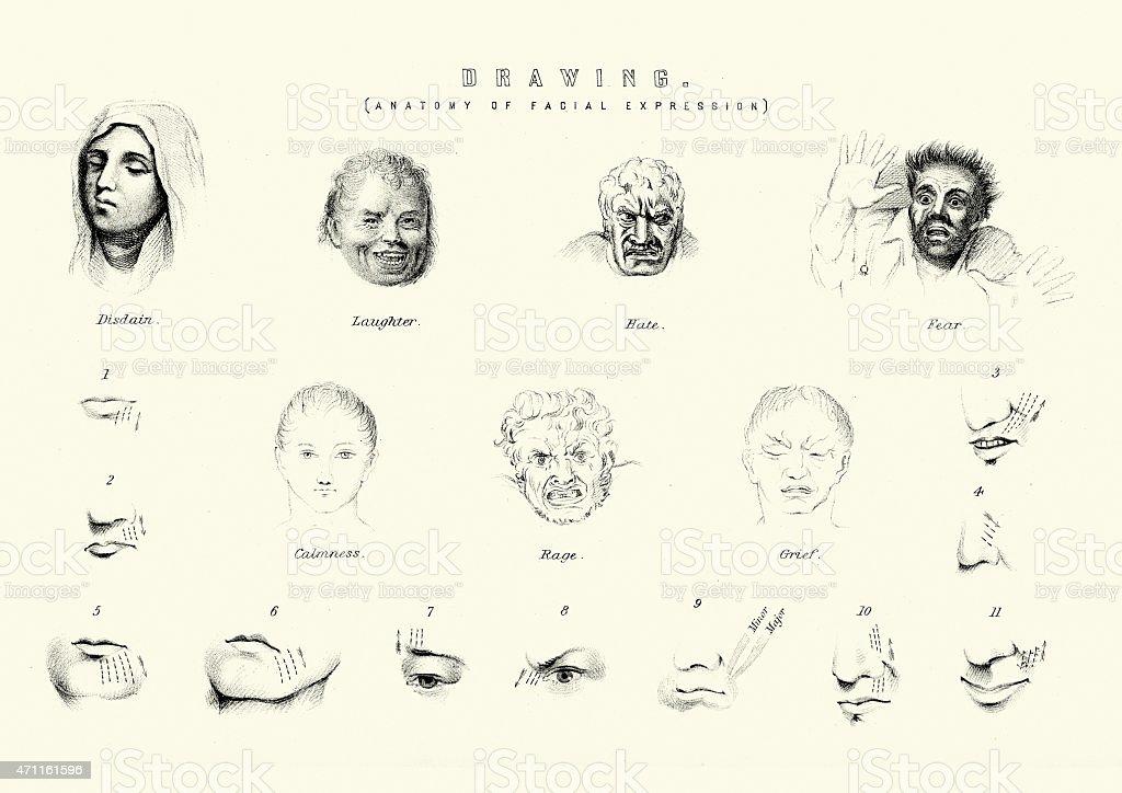 Anatomía De Expresiones Faciales Illustracion Libre de Derechos ...