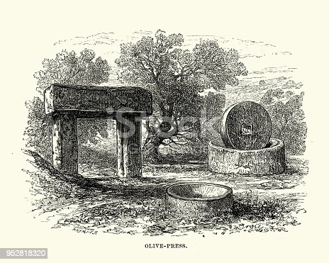 Vintage engraving of a Ancient Olive Press used for making olive oil