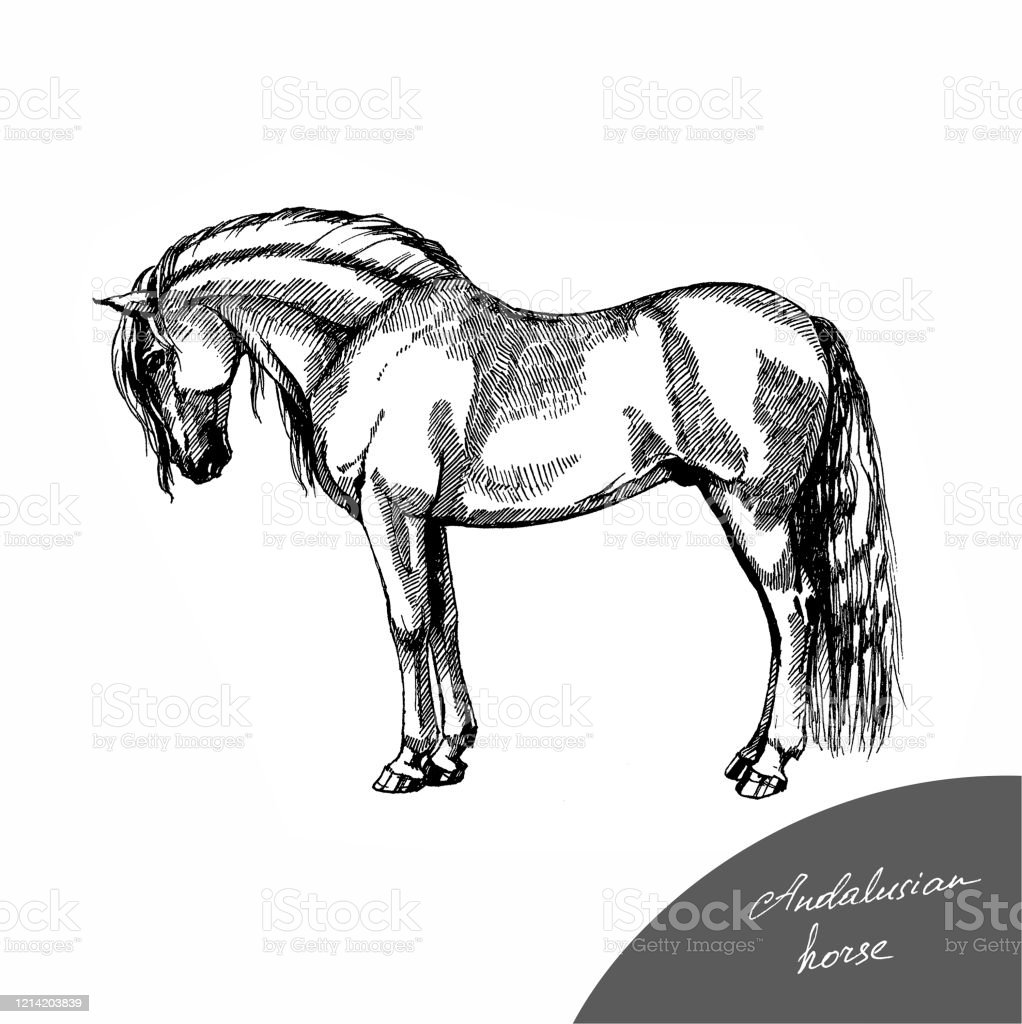 Andalusian Horse Stock Illustration Download Image Now Istock
