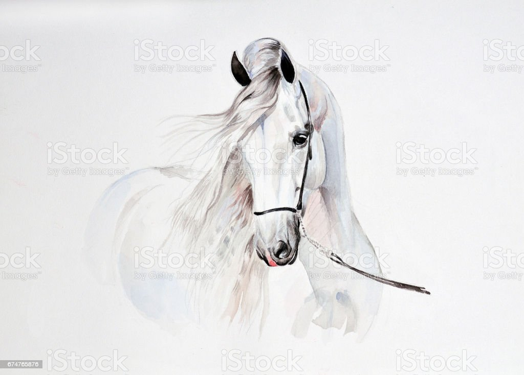 andalusian watercolor painting vector art illustration