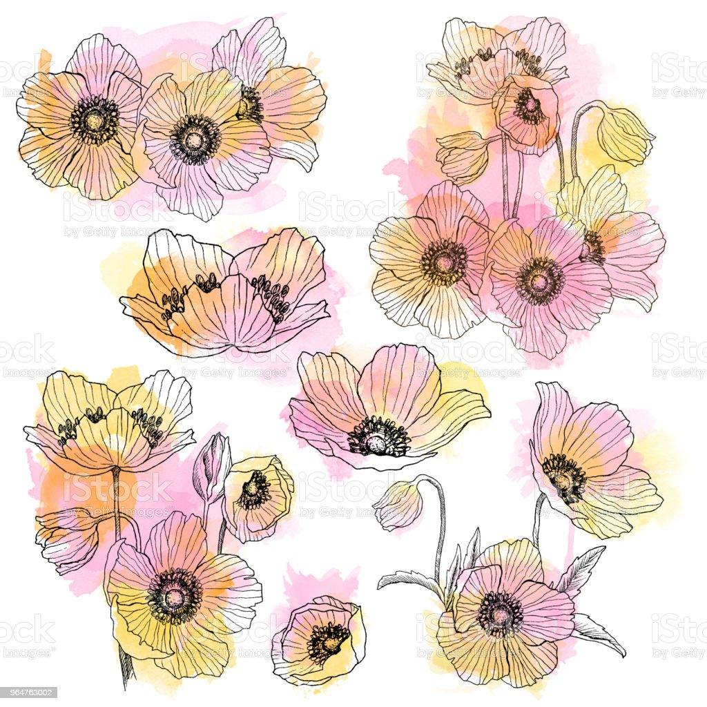 Anemone flower linear drawing bouquet set. Wild plant with watercolor spots. Herbal engraved style illustration. Detailed botanical sketch. Flower concept. Botanical concept. royalty-free anemone flower linear drawing bouquet set wild plant with watercolor spots herbal engraved style illustration detailed botanical sketch flower concept botanical concept stock vector art & more images of abstract