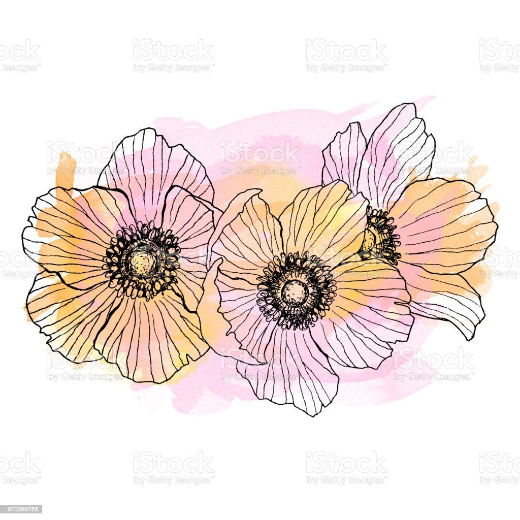 Fleur Anémone Bouquet De Dessin Linéaire Plante Sauvage Avec