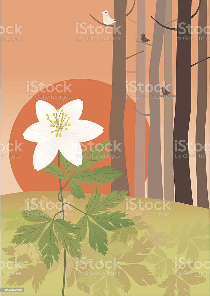 Anemone royalty-free stock vector art