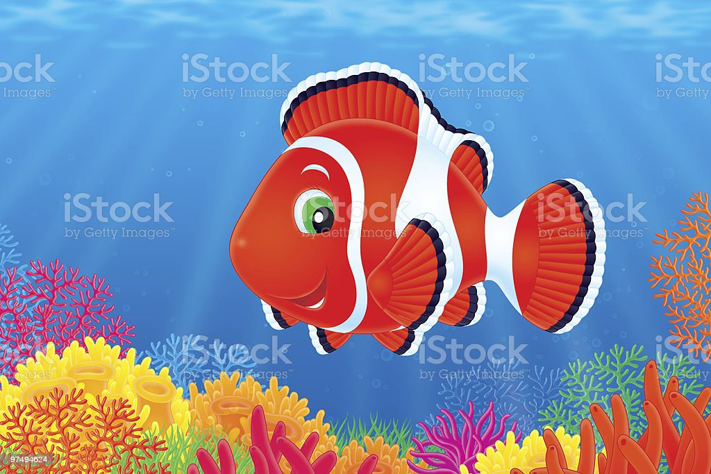 Anemonefish royalty-free anemonefish stock vector art & more images of anemone flower