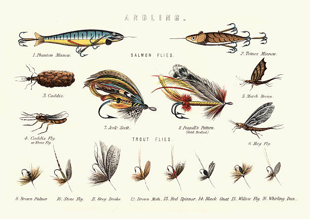 Angling - Victorian Fishing lures Vintage engraving of Victorian Fishing lures. Salmon flies and Trout flies. freshwater fishing stock illustrations