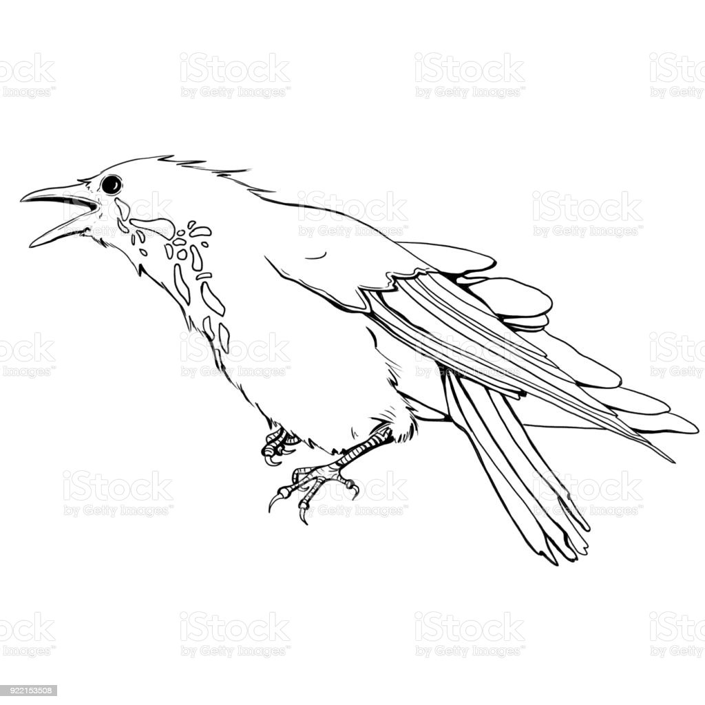 Angry Crow vector art illustration