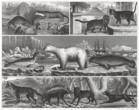 Animal Engraving