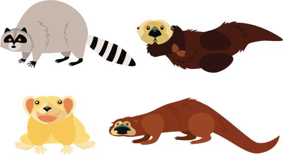 Animal Page: raccoon, pika, otters