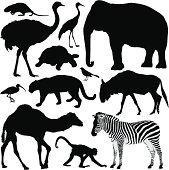 Animal Silhouettes