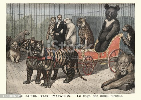 Vintage engraving of Animal trainer performing at circus, Tigers, Lions, Bears. (Au jardin d'acclimatation. La cage des betes feroces), 19th Century