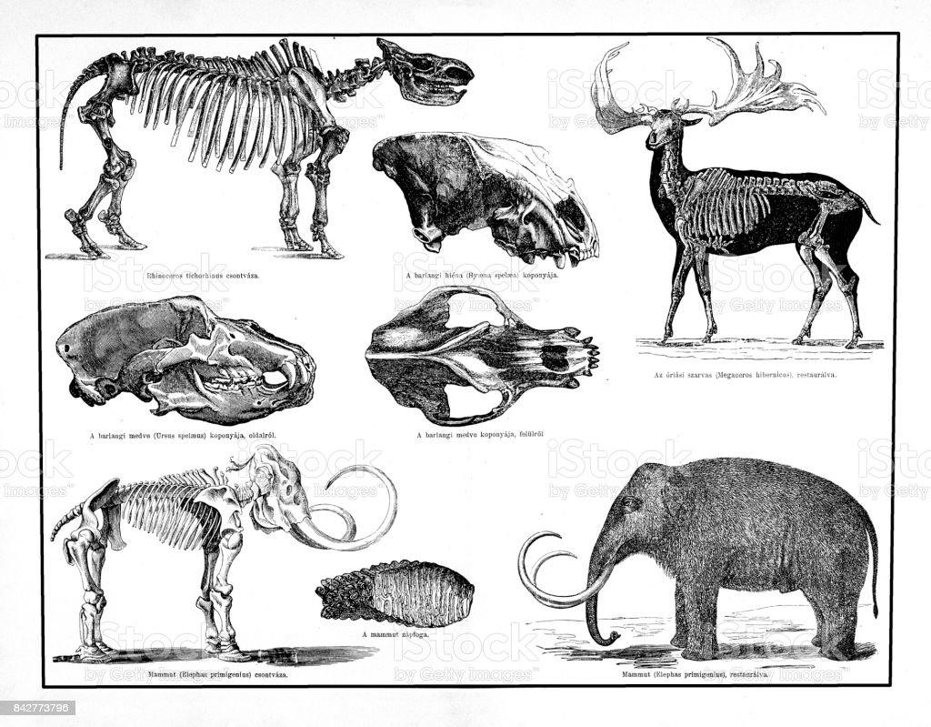 Ilustración de Animales Y Esqueletos Forman El Período Pleistoceno ...