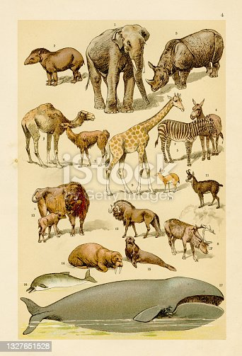 Animals, elephant, whale, rhino, buffalo chromolithograph engraving 1895