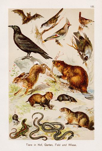 Animals: Farm, Garden, Field & Meadow Chromolithography 1899