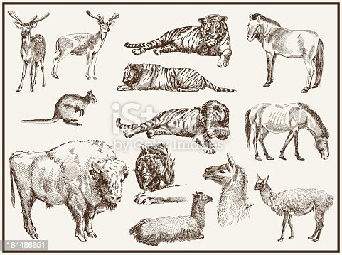 animals from the zoo. set of isolated vector sketches
