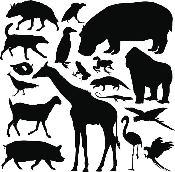 Animals A collection of highly-detailed animal silhouettes. ermine stock illustrations