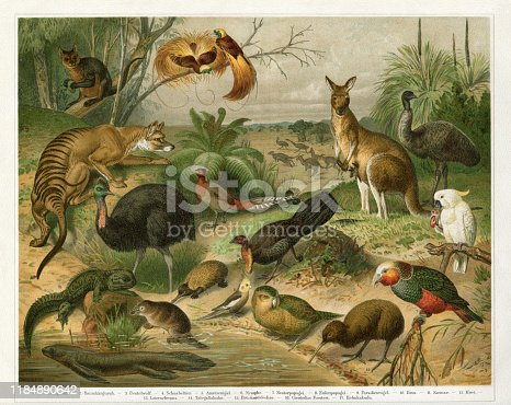 Flora and Fauna in Australia Tasmania and New Zealand Original edition from my own archives Source :