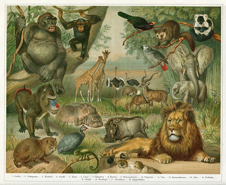 Flora and Fauna of Africa Original edition from my own archives Source :