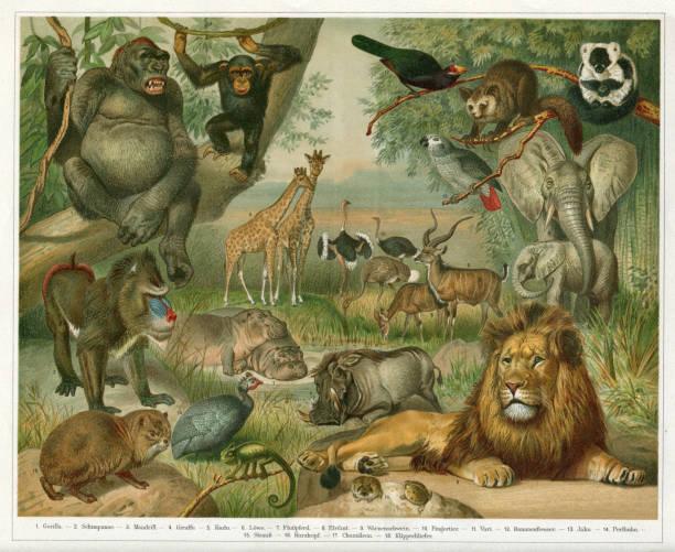 Animals in Ethiopia illustration Africa 1896 vector art illustration