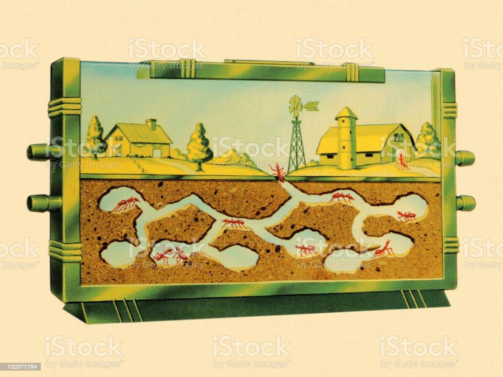Ant Farm royalty-free stock vector art