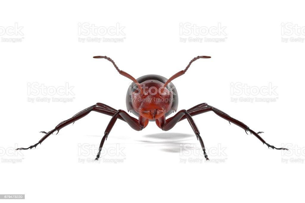 螞蟻 免版稅 螞蟻 向量插圖及更多 -動物群 圖片