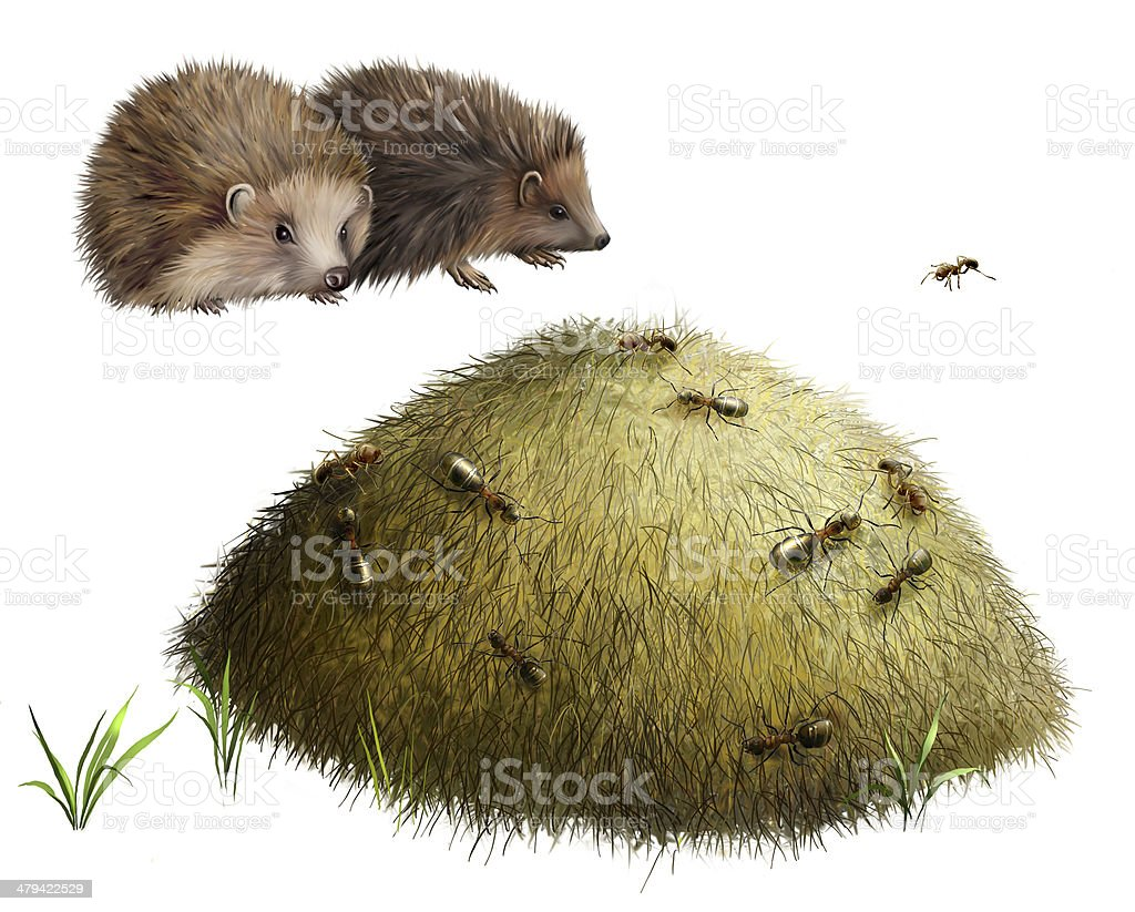 Anthill With Ants Two Hedgehogs Stock Vector Art & More