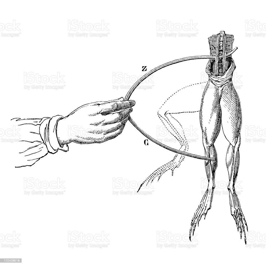 Antique book illustration: Galvani's experiment royalty-free stock vector art