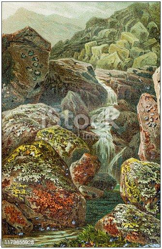 Antique botany illustration: Lichens