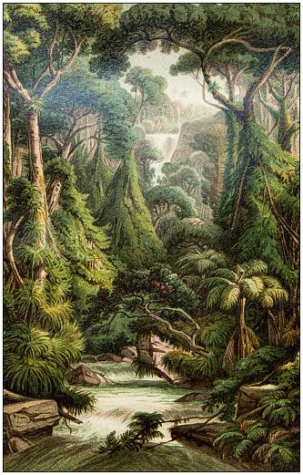 Antique botany illustration: Sri Lanka forest