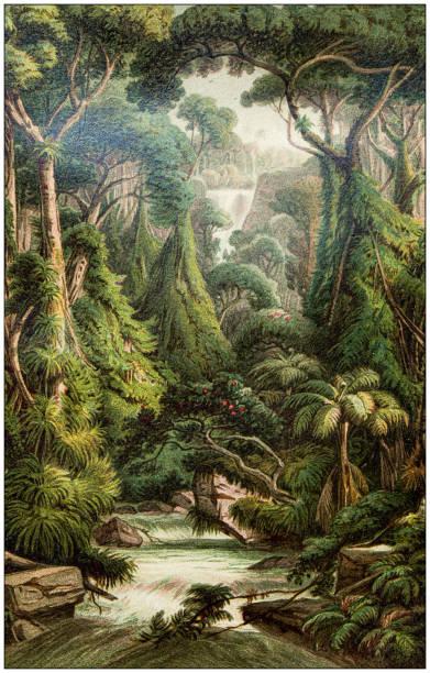 Antique botany illustration: Sri Lanka forest vector art illustration