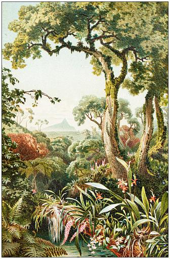 Antique botany illustration: Tropical parasitic plants