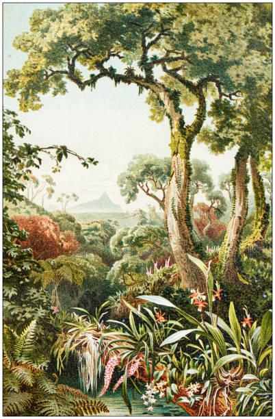 Antique botany illustration: Tropical parasitic plants vector art illustration