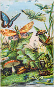 Antique color illustration from German children fable book